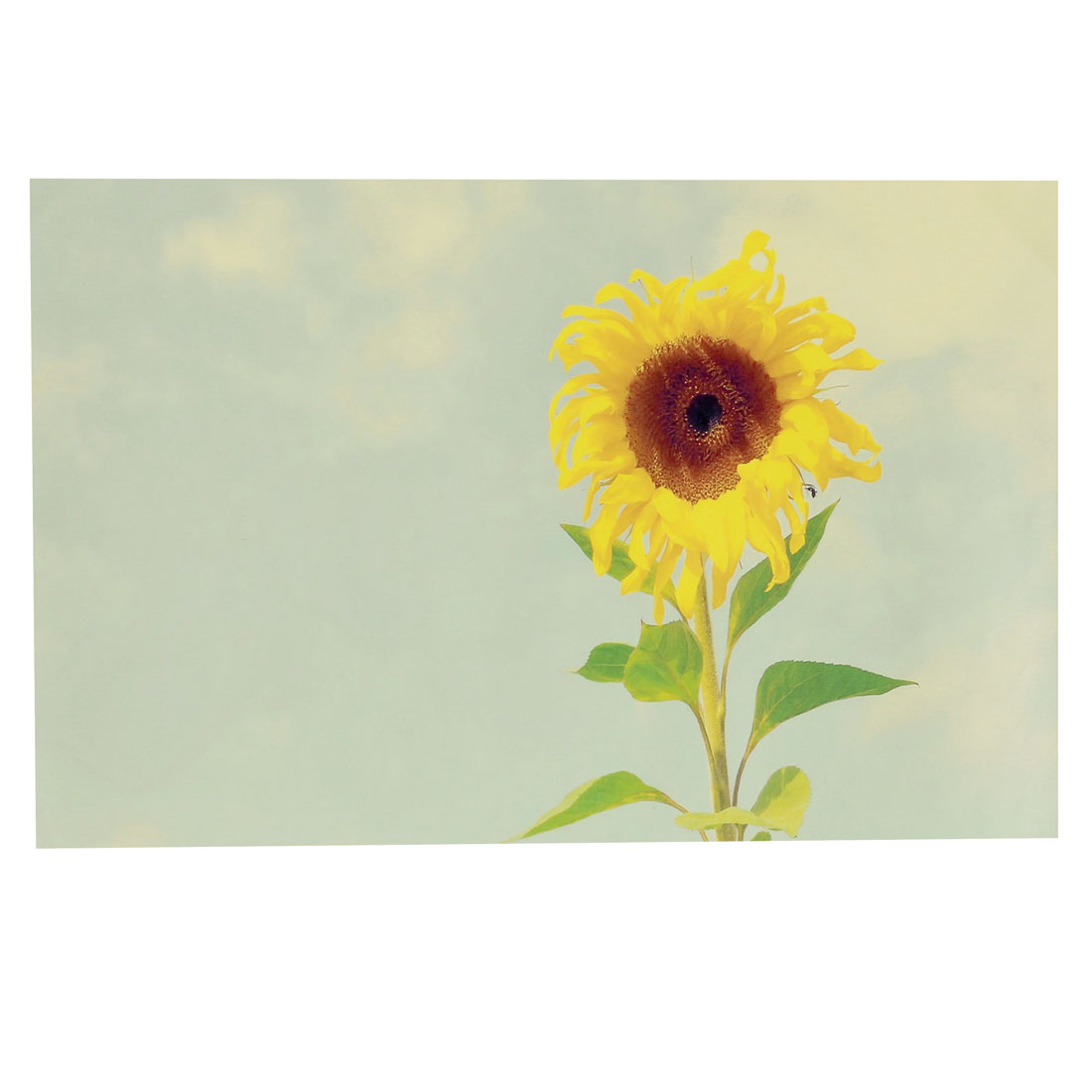 "Yellow Sunflower Print Light Green Decorative Sticker Decal for 14"" Laptop PC"